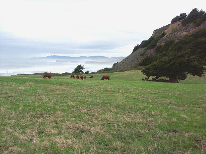 A green field with cows in the distance