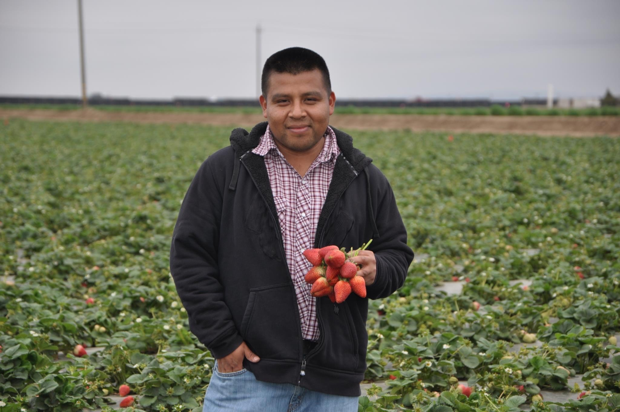 Man holding strawberries standing in strawberry field