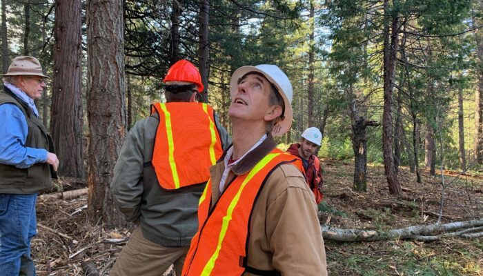Man in high visibility vest in forest looks up at trees
