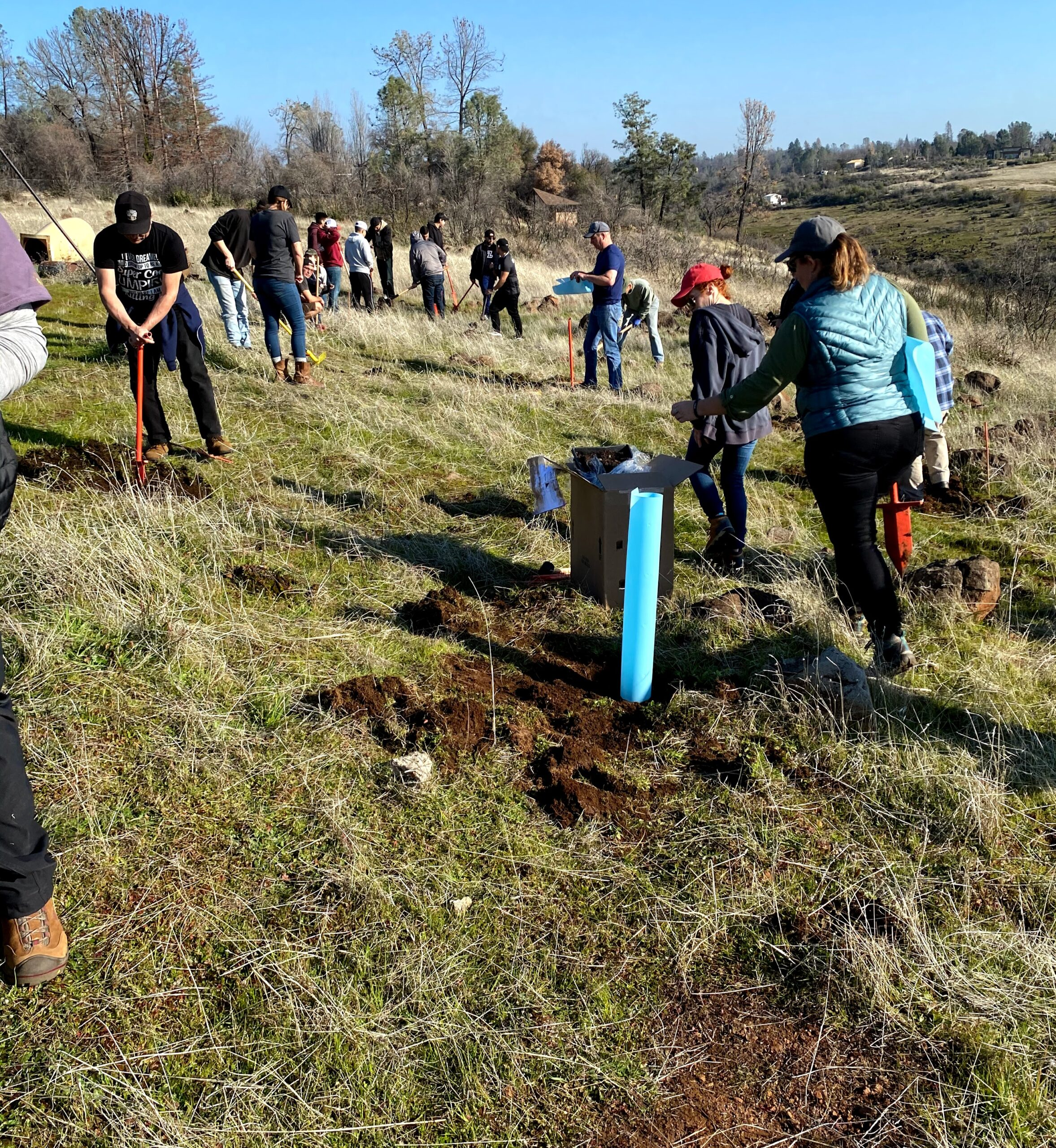 volunteers digging holes and planting trees