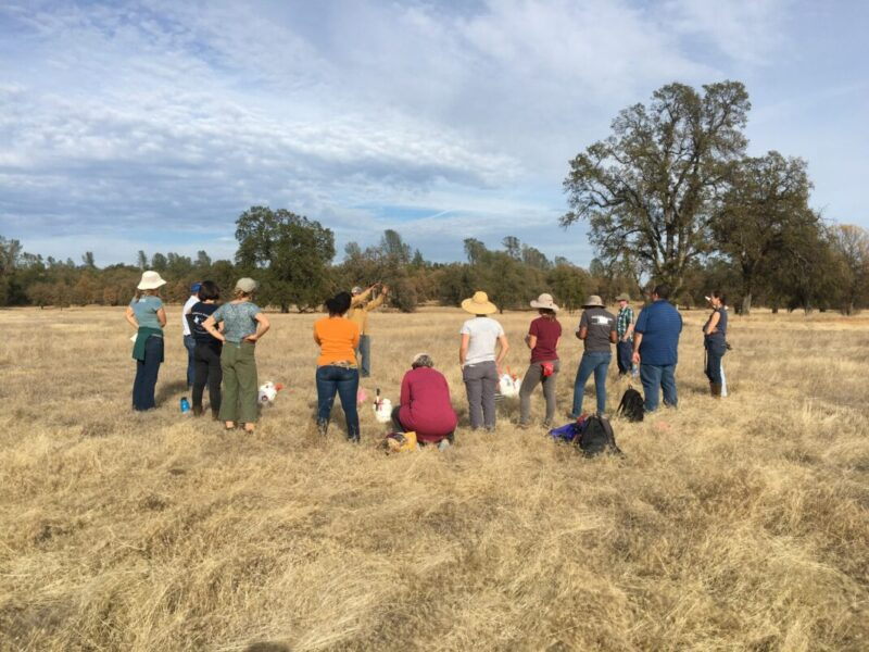 people standing around soil health demonstration in field